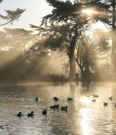 Image of Golden Gate Park