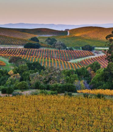 Image of Wine Country